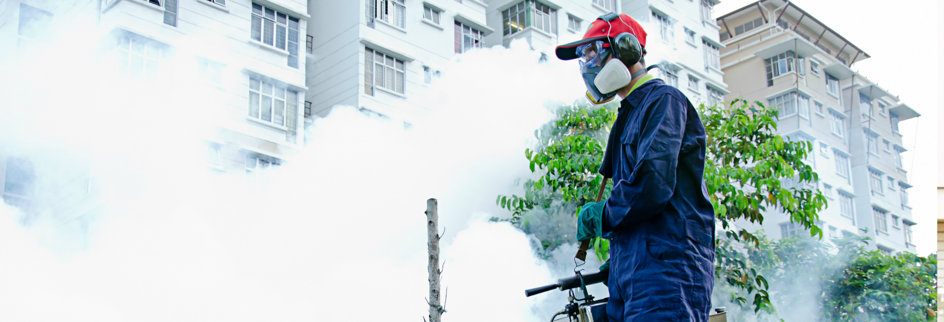 Termipest Limited - Pest Control Services